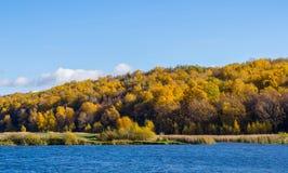 Jesieni drewno Zdjęcie Royalty Free