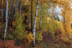 Jesieni drewno na Tserkovk górze Zdjęcie Stock