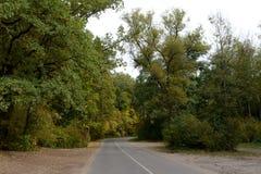Jesieni droga przez lasu Zdjęcie Stock