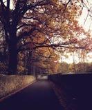 Jesieni droga w Newcastle Na Tyne Obrazy Royalty Free