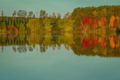Jesieni drzew Barwiony odbicie w jasnym jeziorze zdjęcia stock