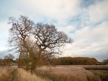 Jesieni drzew krajobrazu spadku nagich gałęziastych płoch złote płochy obrazy royalty free