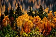 Jesieni drzew odbicie na powierzchni jezioro Zdjęcia Stock