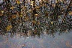Jesieni drzew odbicie na wodzie Fotografia Stock