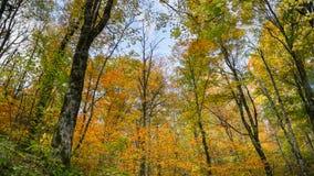 Jesieni drzew Pólnocna Karolina las Fotografia Royalty Free