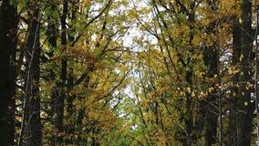 Jesieni drzew tunel, spojrzenie od nieba gruntować zbiory