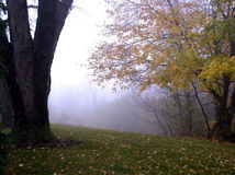 jesienią drzewa Obrazy Stock
