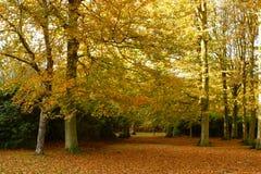 jesienią drzewa Fotografia Royalty Free