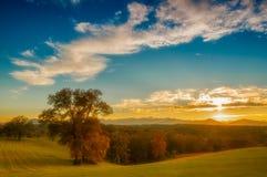 Jesieni drzewa Zdjęcie Stock