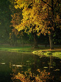 Jesieni drzewa Fotografia Stock