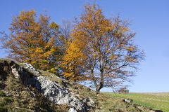 Jesieni drzewa Fotografia Royalty Free