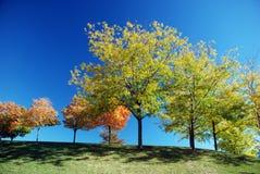 jesienią drzewa Obraz Royalty Free