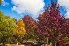 Jesieni drzewa Obraz Stock