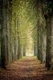 Jesieni drzewa aleja Obraz Royalty Free