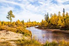 Jesieni drzewa i rzeka Fotografia Royalty Free