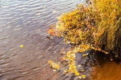 Jesieni drzewa i rzeka Obrazy Stock