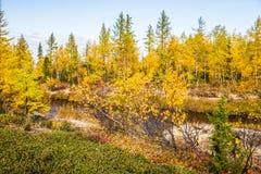 Jesieni drzewa i rzeka Obraz Stock