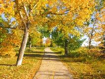 Jesieni drzewa i Wibrujący Złoci liście na słonecznym dniu i Jaskrawym Wijąca droga przemian zdjęcie stock