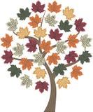 Jesieni drzewa klon Fotografia Stock