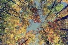 Jesieni drzewa liście - rocznik Zdjęcie Royalty Free