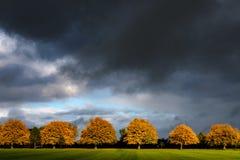 Jesieni drzewa na bezpański w Harrogate obraz royalty free