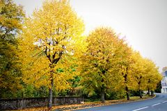 Jesieni drzewa na drodze Zdjęcia Stock