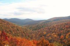 Jesieni drzewa na jeziorze i liście Obraz Royalty Free