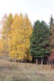 Jesieni drzewa na lesie Zdjęcie Royalty Free