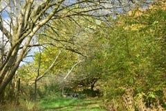 Jesieni drzewa na słonecznym dniu Obraz Stock