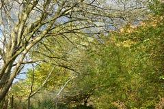 Jesieni drzewa na słonecznym dniu Fotografia Stock