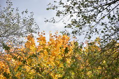 Jesieni drzewa na słonecznym dniu Zdjęcia Royalty Free