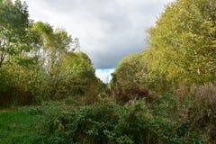 Jesieni drzewa na słonecznym dniu Zdjęcie Royalty Free