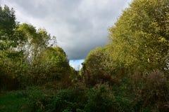 Jesieni drzewa na słonecznym dniu Obraz Royalty Free