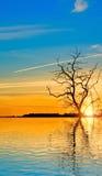 jesieni drzewa na wodnym tle obraz royalty free