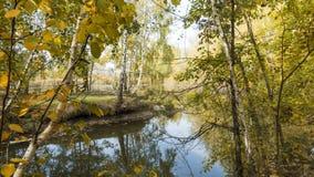 Jesieni drzewa nad wodą Zdjęcie Royalty Free