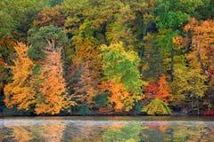 Jesieni drzewa odbicia Obraz Stock