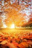 Jesieni drzewa park obraz royalty free