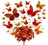 Jesieni drzewa pojęcie Zdjęcie Royalty Free