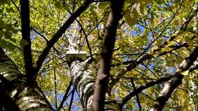 Jesieni drzewa przeciw wieżowom i niebu zdjęcie wideo