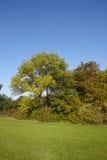 Jesieni drzewa przy krawędzią łąka Zdjęcia Royalty Free