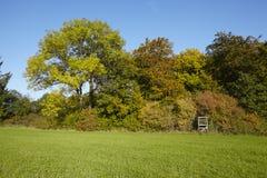 Jesieni drzewa przy krawędzią łąka Fotografia Royalty Free