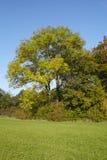 Jesieni drzewa przy krawędzią łąka Fotografia Stock