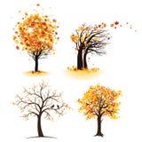 Jesieni drzewa set Zdjęcia Stock