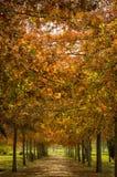 Jesieni drzewa tunel Obraz Royalty Free