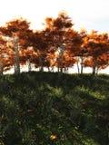 Jesieni drzewa w świetle słonecznym Fotografia Stock