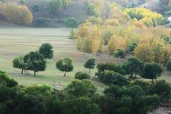 Jesieni drzewa w obszarze trawiasty Zdjęcia Stock