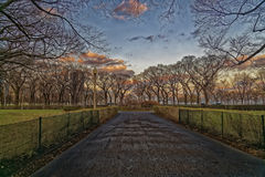 Jesieni drzewa w drodze Fotografia Stock