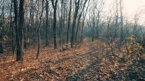 Jesieni drzewa w Lasowym tło śladzie Wewnątrz zbiory