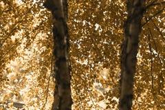 Jesieni drzewa w mglistym lesie obrazy royalty free
