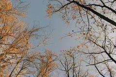 Jesieni drzewa w niebie nad niebo zdjęcia stock